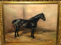 Oil Painting Portrait Study Black Horse in Stable Signed Alice Mary Burton RBA '1893-1968' (2 of 26)