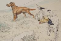 Gun Dogs Hunting G Vernon Stokes Signed Limited Edition Spaniel (2 of 7)