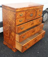 Beautiful 1880's Satin Birch Chest Drawers (5 of 6)