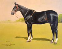 Horse oil painting 'Victor' by L Mallender (8 of 8)