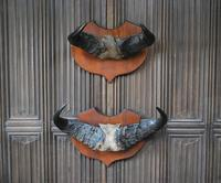 Pair of Cape Buffalo Horn Trophies on Shields (10 of 10)