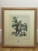 """Watercolour """"Chirping Song Thrush Bird"""" Signed Charles Frederick Tunnicliffe OBE RA 1901-1979 (6 of 35)"""
