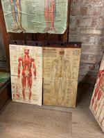 1910 Anatomical Medical Figure (8 of 9)