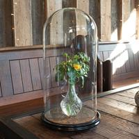 Antique Taxidermy Dome, English, Glass, Collectible, Display Showcase, Edwardian (2 of 7)
