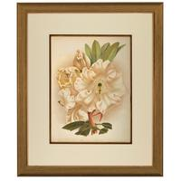 Astonishing Rhododendron Auckland Chromolithograph. Robinson. 1871-1881 (2 of 3)