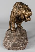 Stunning Large French Bronze Sculpture of Roaring Lion - Signed Le Courtier (6 of 10)