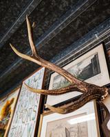 Germany Deer / Stag Mounted Antlers (2 of 4)