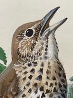 """Watercolour """"Chirping Song Thrush Bird"""" Signed Charles Frederick Tunnicliffe OBE RA 1901-1979 (11 of 35)"""