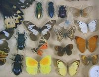 Antique Insect and Butterfly Specimens Collection (3 of 7)