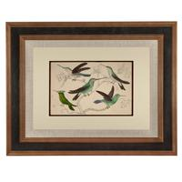 Hand Coloured 'Glorious Hummingbird Two' Lithograph. Goldsmith 1875 (4 of 4)