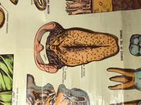Vintage Medical Anatomical Elementary Physiology Chart Poster Early Arnold No 5 (7 of 19)
