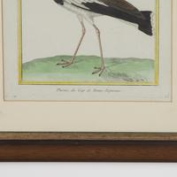 Set of Twelve Bird Hand Coloured Engravings by Martinet (5 of 5)