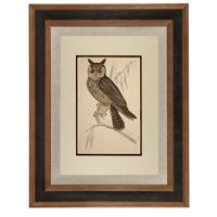 Hand Coloured 'Hunting Owl' Lithograph. Goldsmith 1875 (2 of 4)