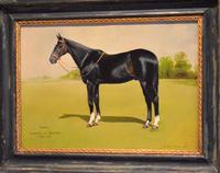 Horse oil painting 'Victor' by L Mallender (5 of 8)