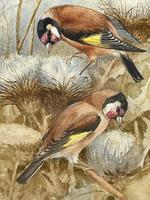 Ornithological Watercolour Finches Birds Study by Florence Barlow Royal Doulton (14 of 40)