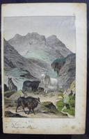 6 Framed Animal Coloured Pictures Plates C1877 Sketches from Nature - India (5 of 14)