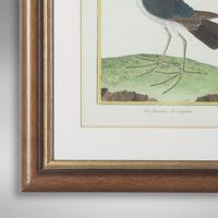 Set of Twelve Bird Hand Coloured Engravings by Martinet (2 of 5)