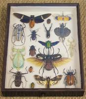 Fabulous Antique Collection Cased Butterfly & Insect Specimens (3 of 8)