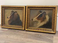Pair of Scottish 19th Century Oil Paintings Rough Collie Dog Portraits After George Washington Brownlow (3 of 49)