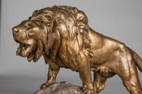 Stunning Large French Bronze Sculpture of Roaring Lion - Signed Le Courtier (4 of 10)