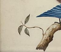 Watercolour of Bird (3 of 4)
