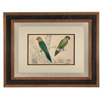 Hand Coloured 'Paraquettes' Lithograph. Goldsmith 1875 (4 of 5)