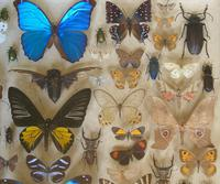 Antique Specimen Butterfly & Insect Case (4 of 8)