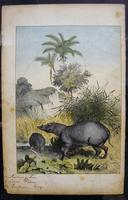 6 Framed Animal Coloured Pictures Plates C1877 Sketches from Nature - India (4 of 14)