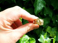 18ct Yellow Gold Snake Dress Ring - Antique Victorian 1898 (2 of 9)