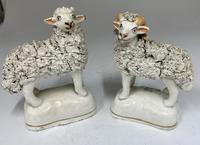 Antique Pair of Staffordshire Pottery Sheep c.1830 (7 of 7)