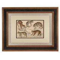 Hand Coloured 'Big Cats' Lithograph. Goldsmith 1875 (4 of 4)
