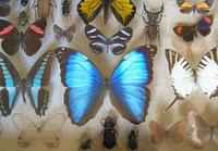 Antique Specimen Butterfly & Insect Case (5 of 8)