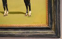 Horse oil painting 'Victor' by L Mallender (4 of 8)