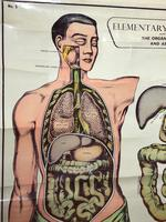 Vintage Medical Anatomical Elementary Physiology Chart Poster Early Arnold No 5 (5 of 19)