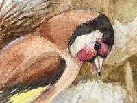 Ornithological Watercolour Finches Birds Study by Florence Barlow Royal Doulton (10 of 40)