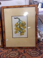 Two Botanical Paintings X2 (2 of 2)