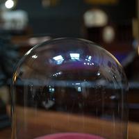 Antique Taxidermy Display Dome, Glass, Showcase, Davis & Co, Bristol, Victorian (2 of 9)
