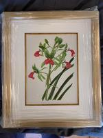 Beautiful 'Cymbidium Orchid' Rare Chromolithograph 1903 (2 of 4)