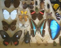 Antique Specimen Butterfly & Insect Case (6 of 8)