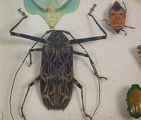 Fabulous Antique Collection Cased Butterfly & Insect Specimens (7 of 8)
