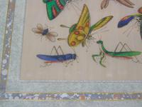 Fine Antique Pair of Chinese Paintings Butterflies & Insects on Pith (9 of 10)