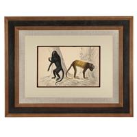 Hand Coloured 'Monkeys' Lithograph. Goldsmith 1875 (4 of 4)
