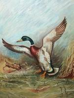Fine 20th Century English Oil Painting Mallard Bird Duck Rising Up W.S Pickering (15 of 16)
