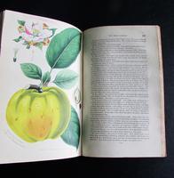 1833 The Practical Gardener & Modern Horticulturist by Charles McIntosh, 2 Volume Set (4 of 8)