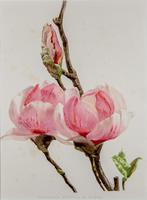 Sublime Magnolias Chromolithograph 1903