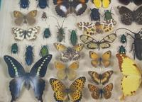 Antique Butterfly and Insect Specimens Collection (6 of 8)