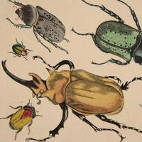 Hand Coloured 'Beasties 1' Lithograph. Goldsmith 1875