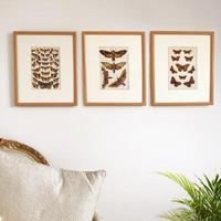 Set of Three Coloured Butterfly & Moth Prints, Dated c.1900