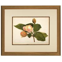 Magnolia Parviflore Chromolithograh. Robinson. 1871-1881 (2 of 3)