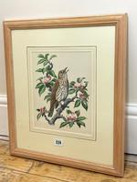 """Watercolour """"Chirping Song Thrush Bird"""" Signed Charles Frederick Tunnicliffe OBE RA 1901-1979 (31 of 35)"""